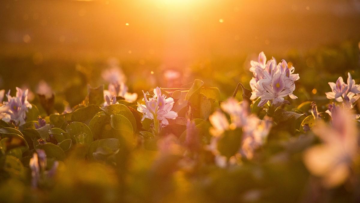 Slunce Vašemu tělu přinese vitamín D.
